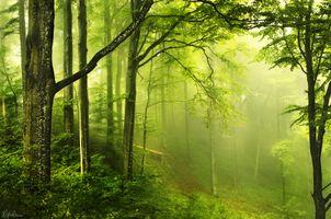 Лесной туман · бесплатное фото