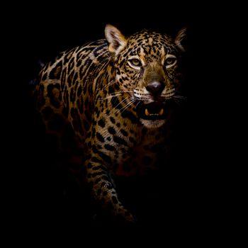 Заставки кошачий, животное, леопард