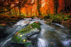 Фото бесплатно река, деревья, осенние листья