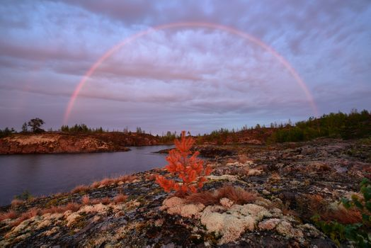 Rainbow over the young trees · free photo