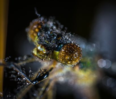 Photo free close-up, macro, invertebrate
