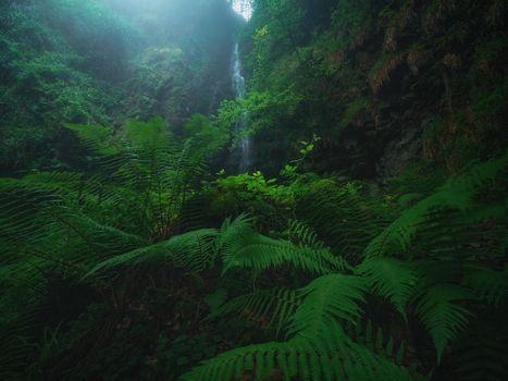 Заставки лес, деревья, папоротник