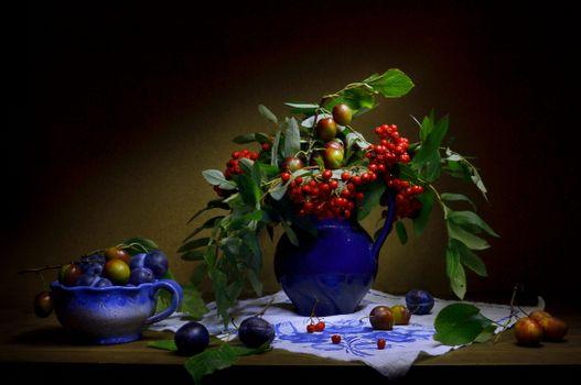 Photo free still life, berries, mountain ash