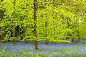 Красивые фотографии на тему цветы, лес