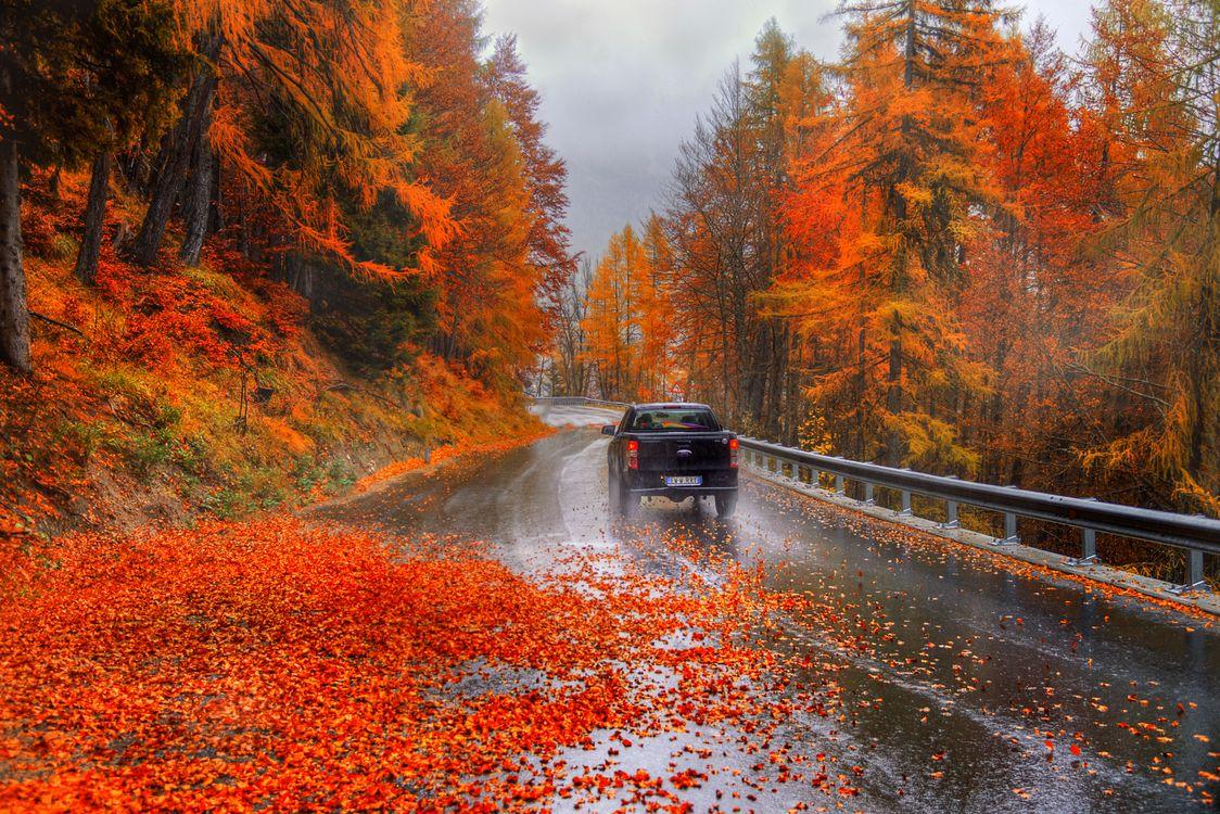 Обои осень, дождь, мокрый асфальт картинки на телефон