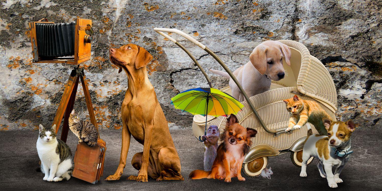 Обои собака, животных, милый, кошка, щенок, мышь, перейти картинки на телефон