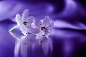 Заставки Still Life, цветы, цветок
