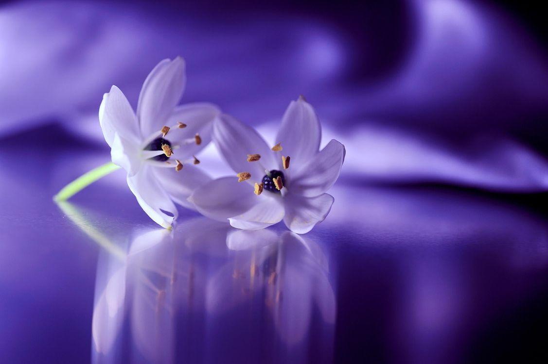 Фото бесплатно Still Life, цветы, цветок - на рабочий стол