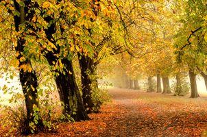 Фото бесплатно Туманное осеннее утро, Castle Grove Park, Уэйкфилд
