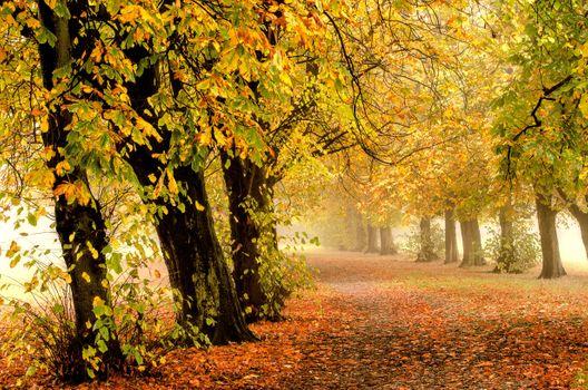 Photo free Misty autumn morning, Castle Grove Park, Wakefield