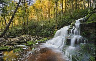 Фото картинки осень, лес, деревья