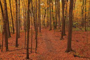 Фото бесплатно осень, осенние краски, лес
