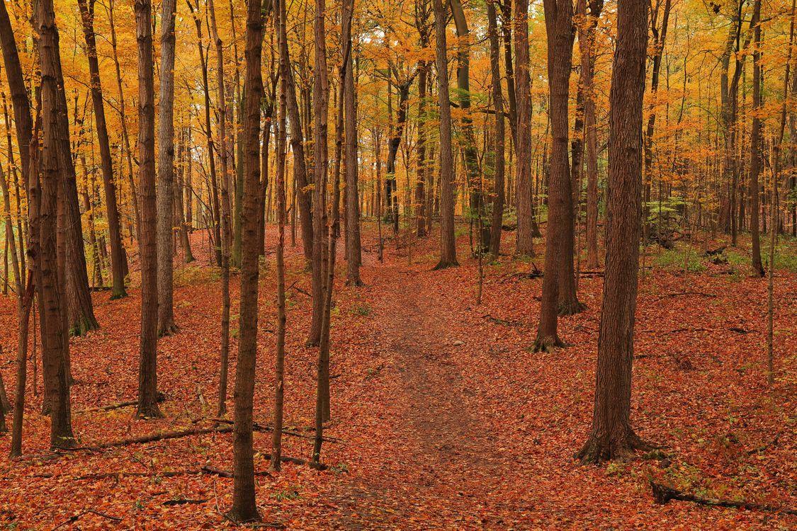Обои осень, осенние краски, лес картинки на телефон
