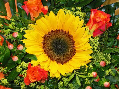 Бесплатные подсолнухи, цветы красивые обои на рабочий стол