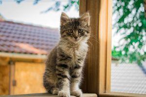 Бесплатные фото tabby,kitten,котенок,табби,окно,взгляд