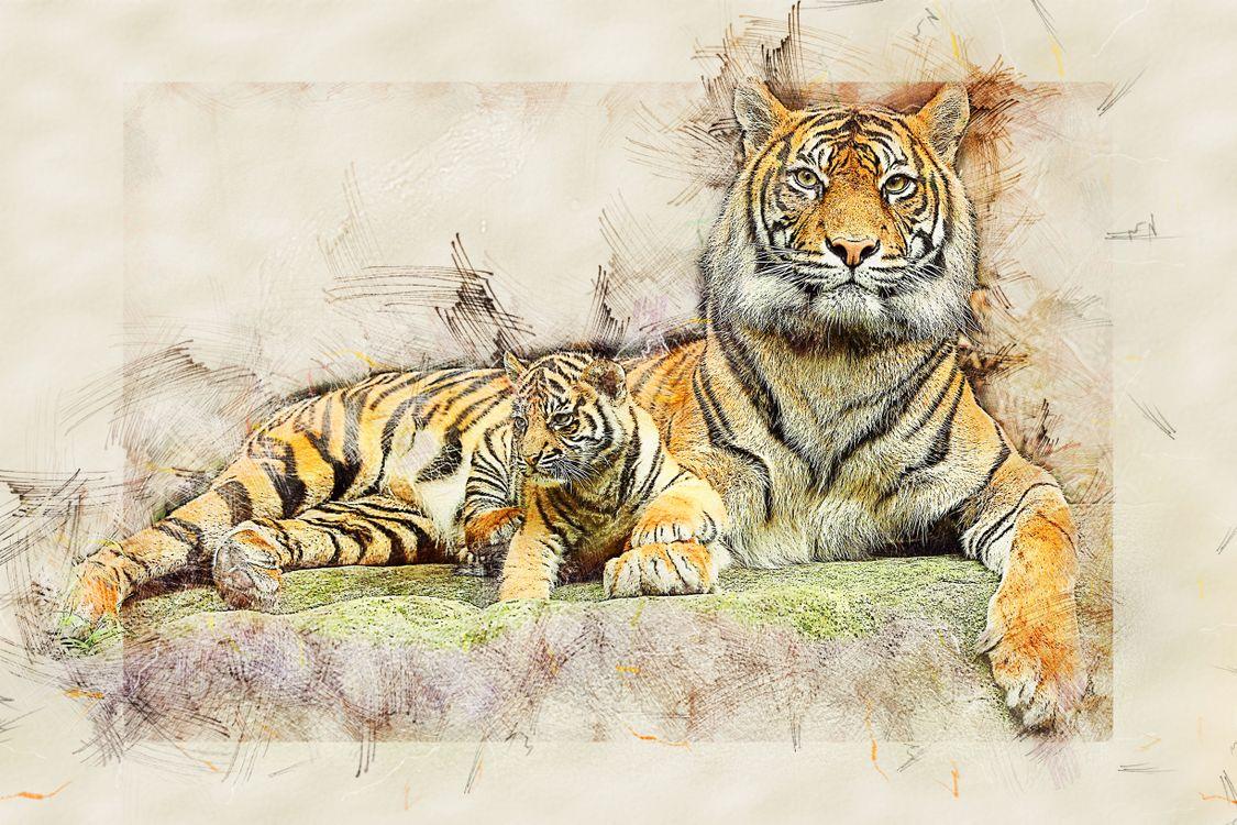 Обои тигр, кошка, хищник, животные, опасный, природа, млекопитающее картинки на телефон