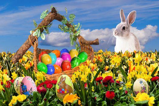 Бесплатные фото пасха,пасхальный,счастливой пасхи,пасха нест,osterkorb,пасхальное яйцо,яйцо,сюрприз,весна,окрашенные яйца,пасхальное приветствие,пасхального зайца