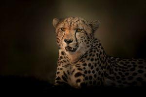 Бесплатные фото портрет,гепард,Cheetah,Rift Valley,Kenya