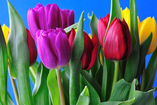 Букетов тюльпанов высокого качества · бесплатное фото