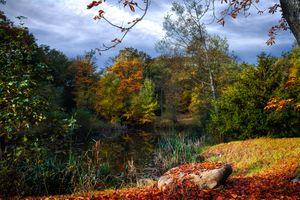 Бесплатные фото осень,пруд,водоём,лес,деревья,природа,пейзаж