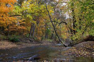 Бесплатные фото осень,река,лес,деревья природа,пейзаж
