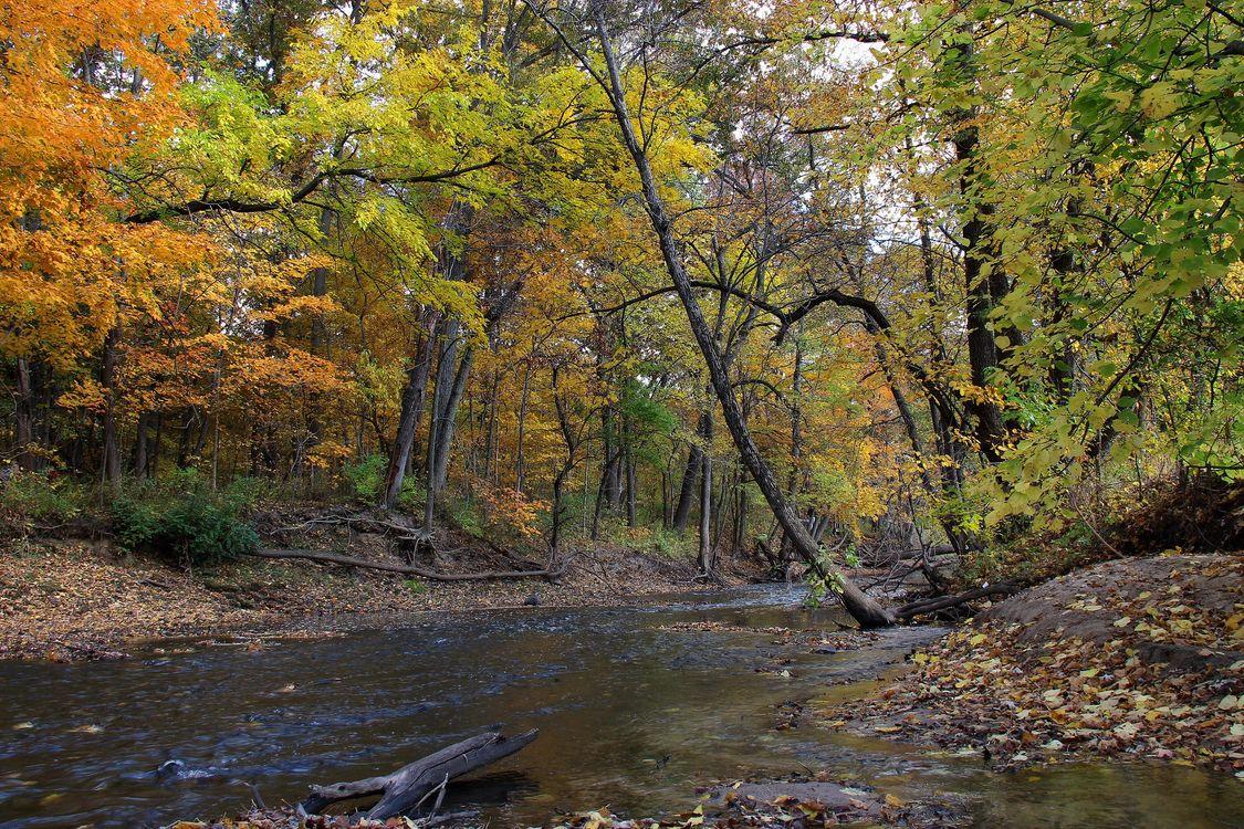 Фото бесплатно осень, река, лес, деревья природа, пейзаж, пейзажи