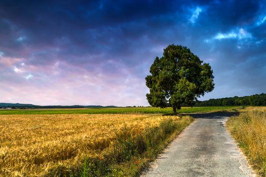 Photo free tree, nature, ears of corn