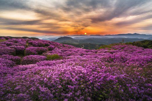 Фото бесплатно фиолетовые цветы, закат, небо