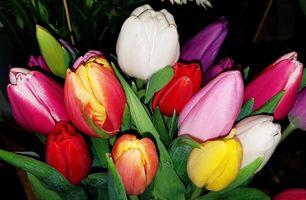 Бесплатные фото букет,тюльпаны,цветы,красные,белые,желтые