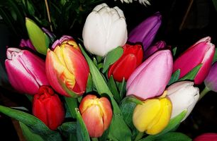 Photo free bouquet, tulips, flowers