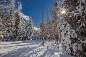 Фото бесплатно сугробы, деревья, зима