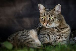 Фото бесплатно кот, кошка, домашнее животное, морда, взгляд
