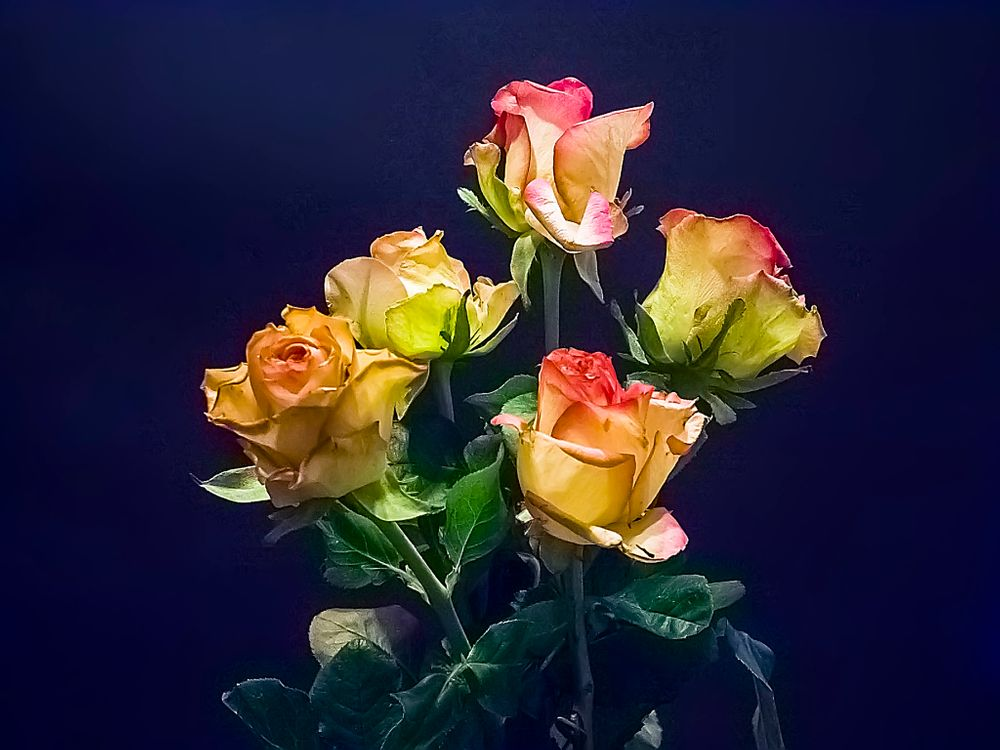Фото бесплатно розы, растения, букет - на рабочий стол