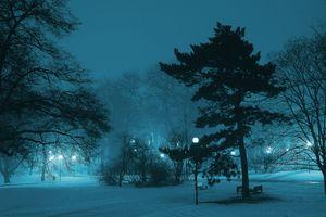 Фото бесплатно atmosphere, branch, cold