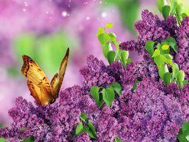 Фото бесплатно бабочки, цветы, букет сирени