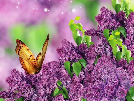 Photo free butterfly, flowers, bouquet of lilac
