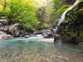 Заставки лес, деревья, река