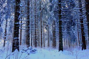 Заставки зима,лес,снег,сугробы,деревья,природа,пейзаж
