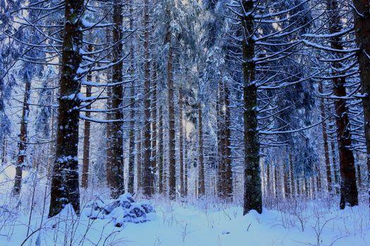 Бесплатные фото зима,лес,снег,сугробы,деревья,природа,пейзаж