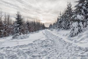 Бесплатные фото зима,снег,тропинка,сугробы,деревья,пейзаж