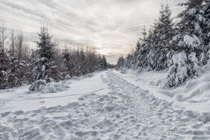 Фото бесплатно Тропинка, снег, зима
