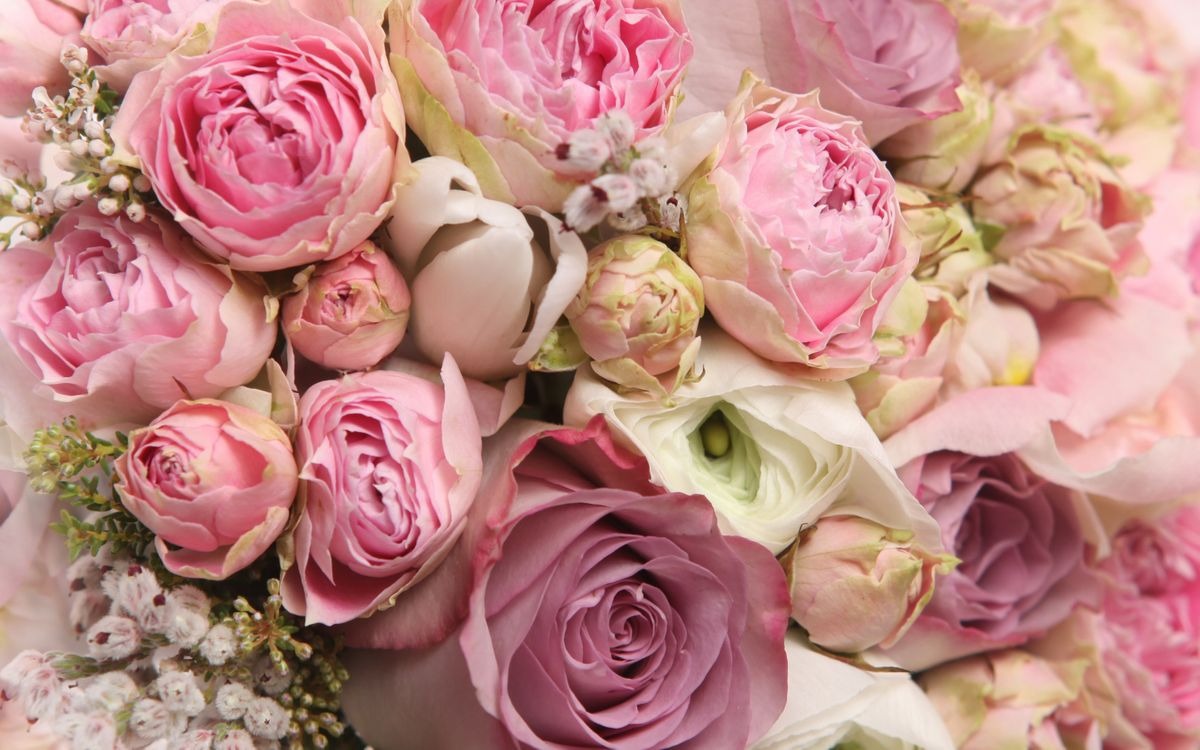 Free photo beautiful, bouquets, cool - to desktop