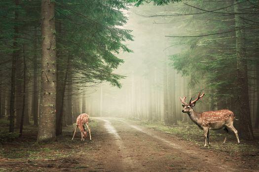 Фото бесплатно пейзаж, туман, лес