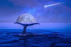 Фото бесплатно луна, звезды, падающая звезда