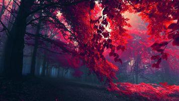 Заставки осень, деревья, цвета осени