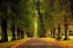 Фото бесплатно осень, цветы, лес, трава, HDR съемка, листья, парк, дорога, деревья, прогулка