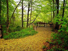 Заставки мост, лес, парк