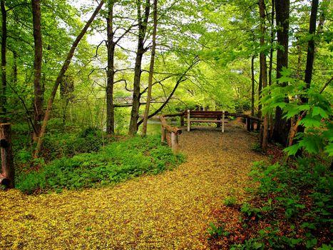 Photo free bridge, forest, park