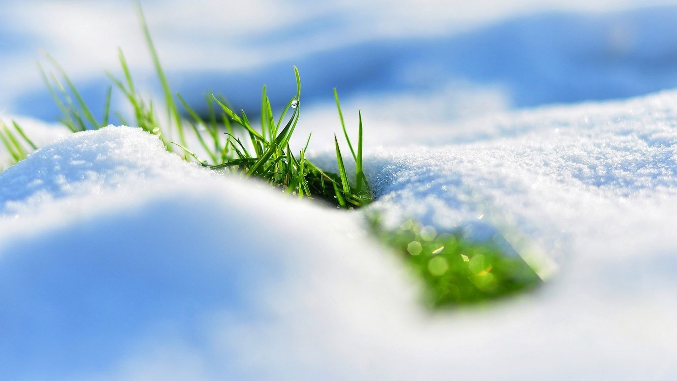 Photos for free grass, macro, snow - to the desktop
