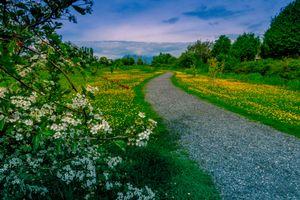 Бесплатные фото весна, дорога, деревья, цветы, цветение, закат, пейзаж